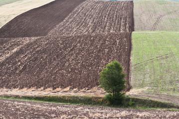 田地里的一棵树