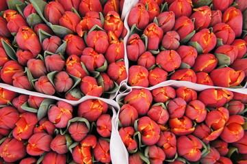 Tulip market in Amsterdam