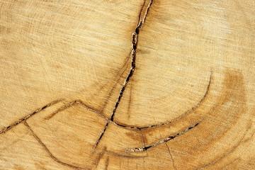 wood texture © Matthias Buehner