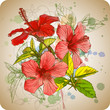Hibiscus flowers & watercolor background