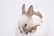 Little rabbit on white