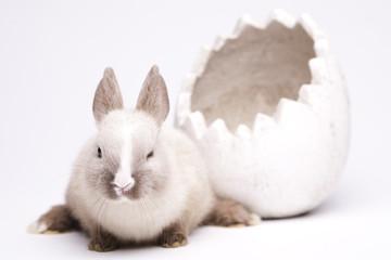 Little bunny, Easter
