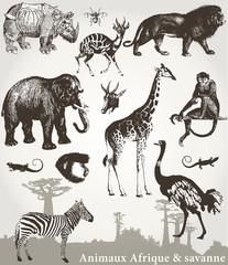 Animaux Afrique et savanne