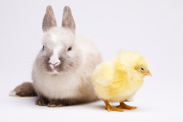 Happy Easter animal, Chick and bunny
