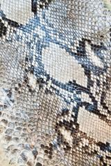 Snake skin pattern texture background