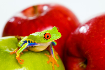 Red eyed tree frog, fresh green and red apples