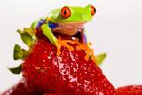 Fototapete Rot - Eyed - Reptilien / Amphibien