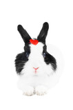 rabbit with red heart isolated
