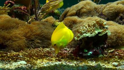 Beautiful fishes in an aquarium