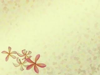 frangipani or plumeria tropical flower