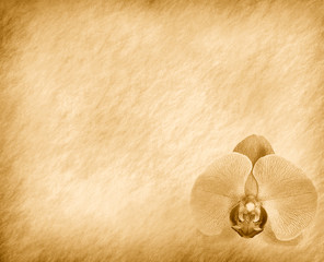 vintage wallpaper background with orchid .