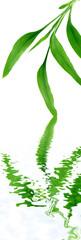 feuilles de bambou bonheur asiatique