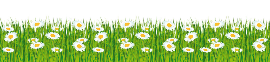 Fresh green grass banner with daisies