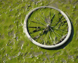 dried up green river bed reveals muddy bicycle wheel poster
