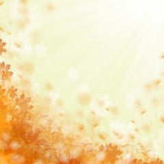 Beautiful orange flowers background