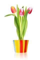 Tulpen im Blumentopf