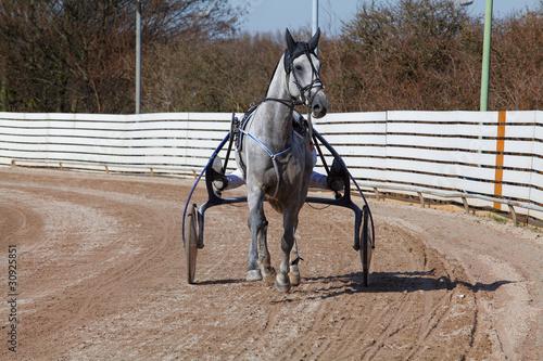 harnes racing. horse