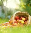 Fototapeta Bios - Organiczny - Roślinne