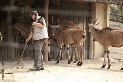Tierpfleger / Tierplegerin - 30936016