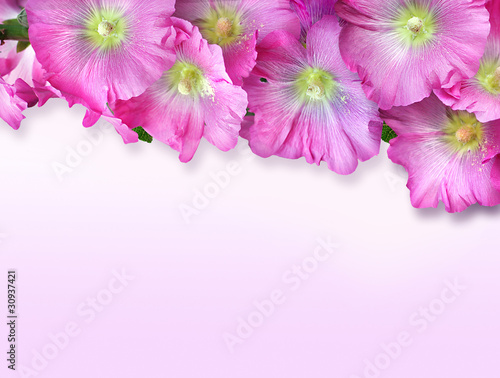 Greeting card with flowers mallow