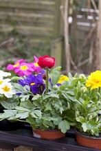 Jaskry i pierwiosnki za łóżko kwiatu w ogrodzie