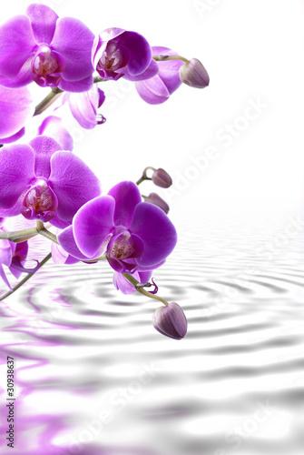 Fototapeten,orchidee,blume,blühen,schönheit