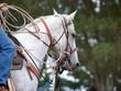Cowboy's Pony