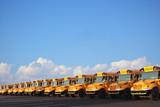 Row of School Buses - 30941296