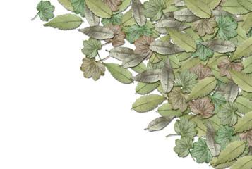 落ち葉の背景