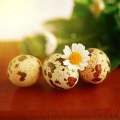 Easter bird eggs with sunshine