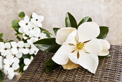In de dag Magnolia Magnolia And Dogwood Still life
