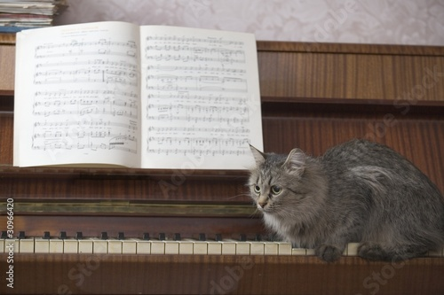 A piano with a book of music and a cat sitting on the piano keys