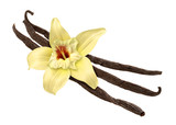 Fototapety Vanilla Bean and Flower (clipping path)