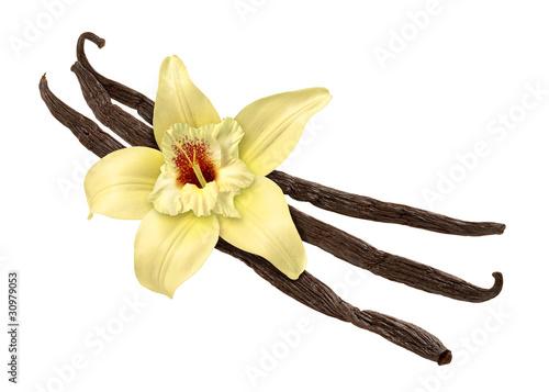 Vanilla Bean i Kwiat (clipping path)