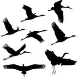 Zugvögel, Wandervögel
