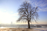 tree over belgrade poster