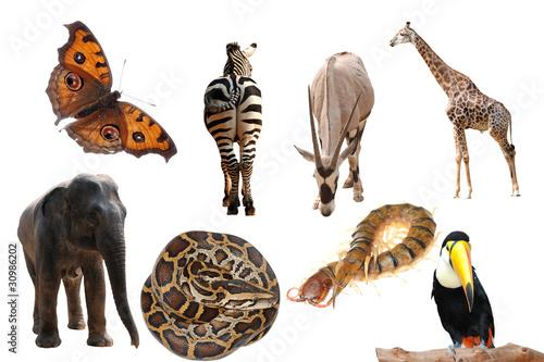 Papiers peints Hyène wild animal collection