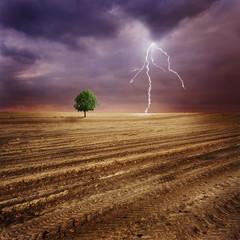 Lone tree and lightning