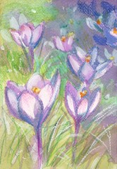 Spring crocus-painted watercolor picture