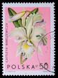 Poland - CIRCA 1965: A stamp - Cattleya Warszewiczi