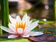 Fototapeten,wasser,schöner,schönheit,blühen