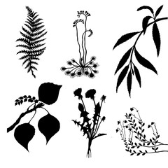 set of the plants on white background