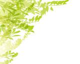 Fototapety green background