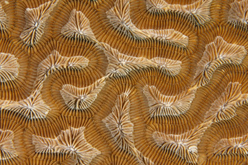 close up of coral, roatan, honduras background texture