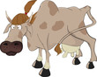 Cow.Cartoon