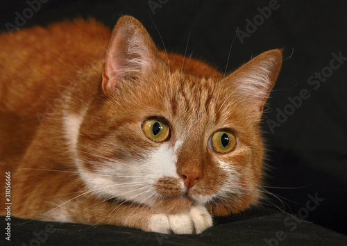 Red-haired cat  with attentive look