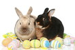 Cute easter bunnies with colored eggs