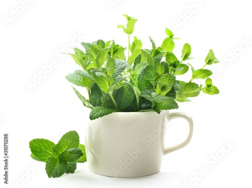 Mint leaves in cup