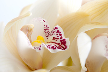 Orchid flower close-up, selective focus
