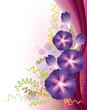 Purple morning glory